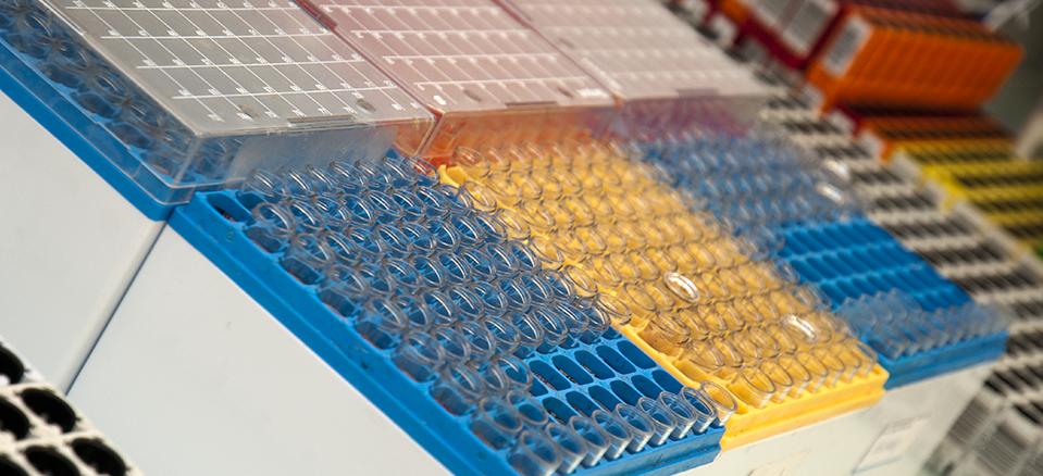Biosaga : Laboratoires d'analyses médicales du Val d'Oise ...